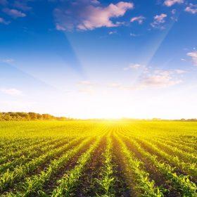 مزرعه بیوچار - گروه فصل پنجم