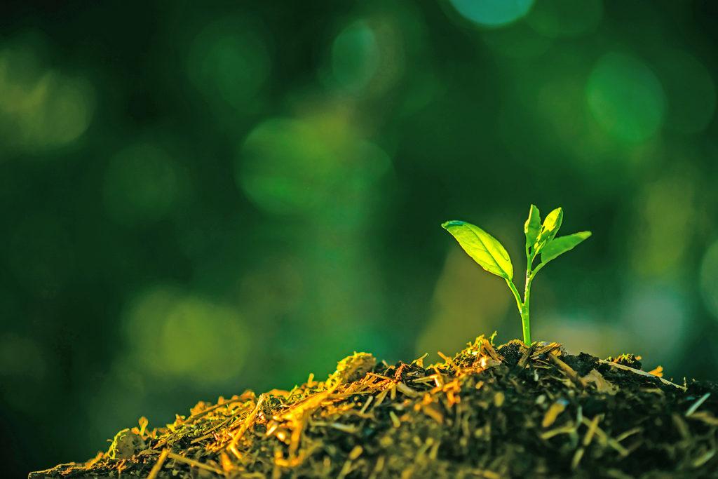 تاریخچه و علت گسترش کشاورزی ارگانیک
